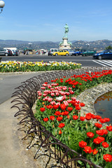 Plant of tulips in city