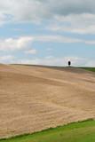 Collina con terreno appena arato a Grosseto in Toscana poster