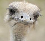 Fototapeta zwierzę - dziób - Ptak