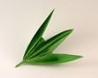 hola de bambu