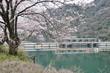 城山ダムと桜