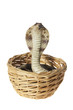 Rubber Cobra in Basket