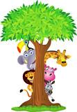Fototapety Animal hiding behind tree