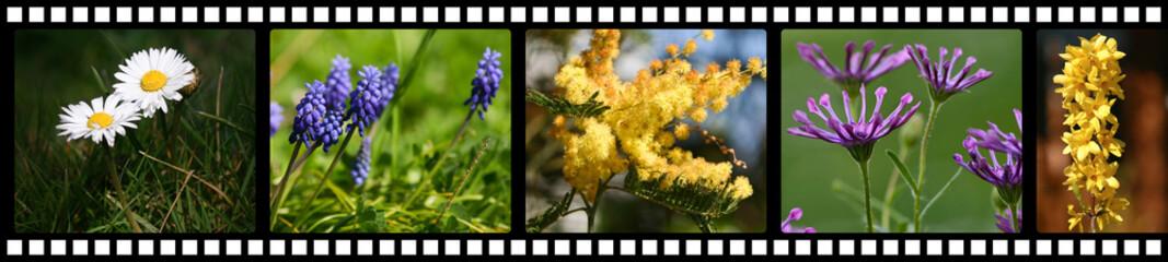 fleurs sur négatif photo