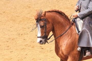 pferd in andalusien