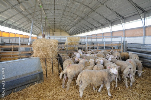Papiers peints Sheep bergerie