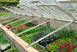 Bedding Plants  in glass frames