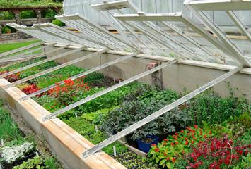Bedding Plants  in glass frames