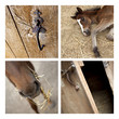 Cheval, équestre, haras, équitation, ferme, écurie, animal