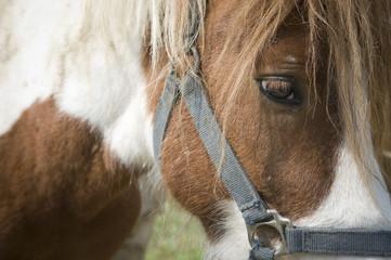 Sad pony portrait