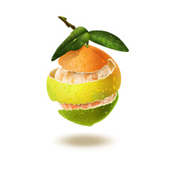 Citrus Multifruit. Illustration.