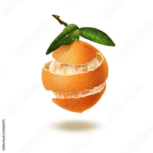 Citrus Multifruit. Illustration.