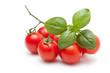 Fresh Tomato And Basil