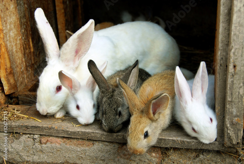 Bunny Rabbits family