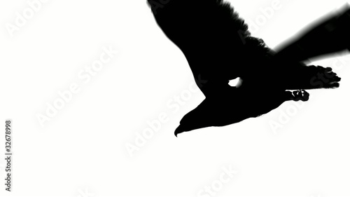 flying eagle in black on white background