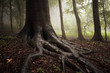 roots of a tree in a misty dark and green forest