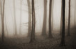 mysterious forest with fog in sepia and dark trees