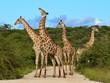 Fototapeten,giraffe,afrika,afrikanisch,tier