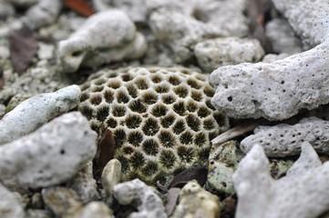 Weiße Korallen