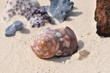 Von der Zeit gezeichnete Muschel vor Korallen am Strand