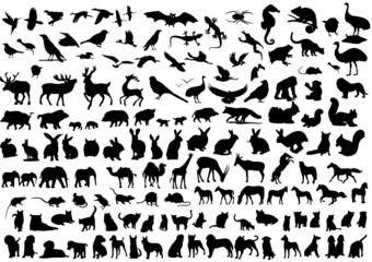 Sammlung Tiere