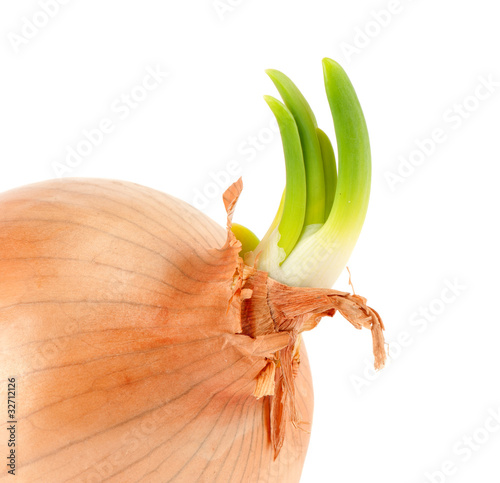 bulbous green onion