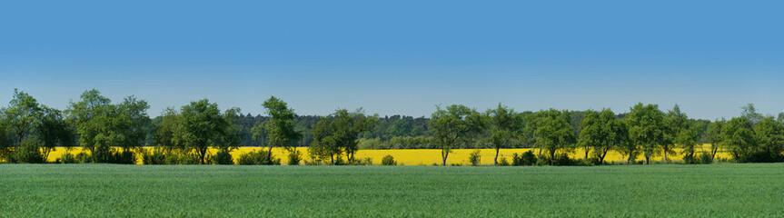 Allee zwischen angrenzenden Feldern