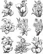 Set of sketches of flowers (hibiscus ,narcissus, orchid, poppy)