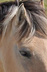 oeil,oreille et crinière de henson