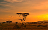 Fototapety African sunset in the Serengeti National Park, Tanzania