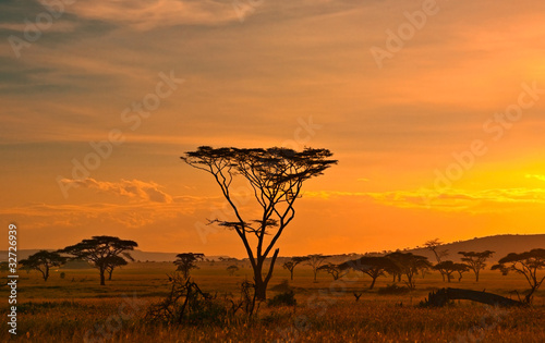 African sunset in the Serengeti National Park, Tanzania