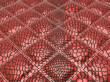 Red stitched Alligator skin with rectangles