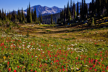 Mt. Revelstoke Meadows