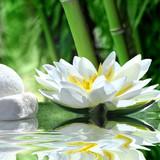 Fototapeta kwiat - woda - Kwiat