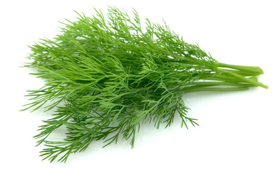 young dill close up