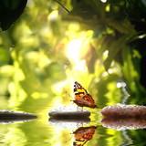 Fototapeta kamień - woda - Insekt