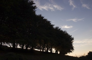 Silhouetted Trees Near Croaghaun, Co Waterford, Ireland