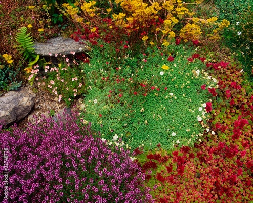 Kilcrohane, Co Cork, Sedums And Thyme, Ireland