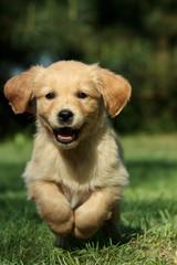 Puppy running in a garden