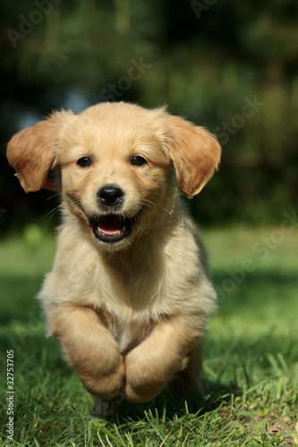 Puppy running in a garden