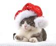 Junge Katze mit Weihnachtskappe