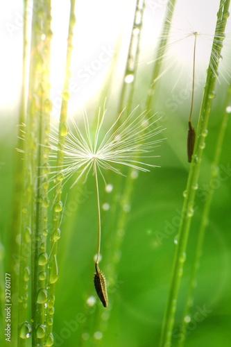 Pflanzen foto schiebegardine seite 42 selbst gestalten - Duschvorhang mit orchideen ...
