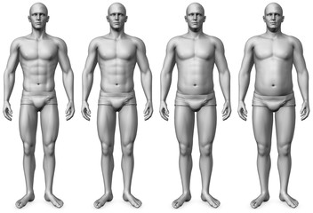 male morph - fit to fat