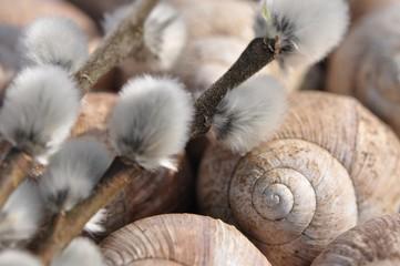 Schneckenhäuschen Weinbergeschnecken mit Weidenkätzchen