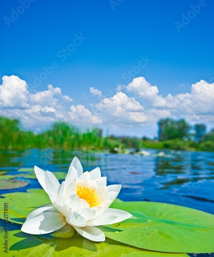 Foto Spatwand Water planten beautiful white lily floating on a water