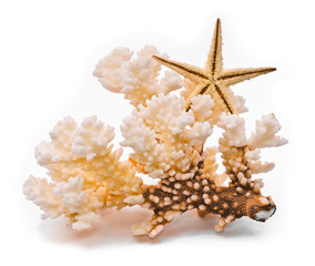 White coral and starfish. Isolated on white background