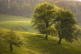 spring landscape with trees and green grass at sunset