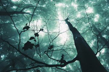 tree in a magical forest with green fog