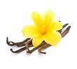 Leinwandbild Motiv Blüte, Vanille
