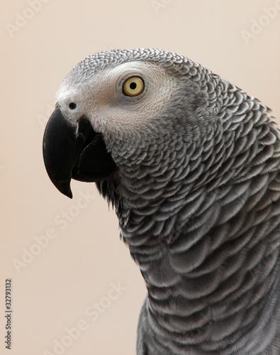Fototapeten,vögel,gespräch,hell,eye